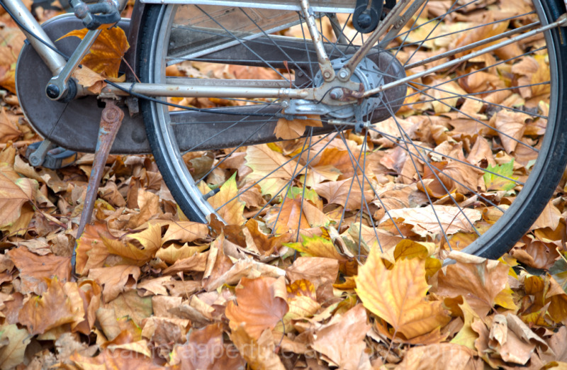 Leaves surrounding a bike wheel in Amsterdam