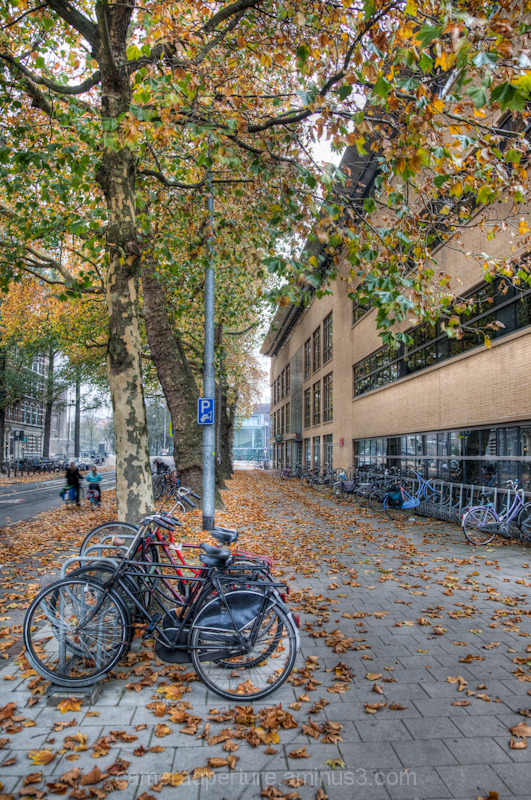 A path covered in leaves, in the city of Amsterdam