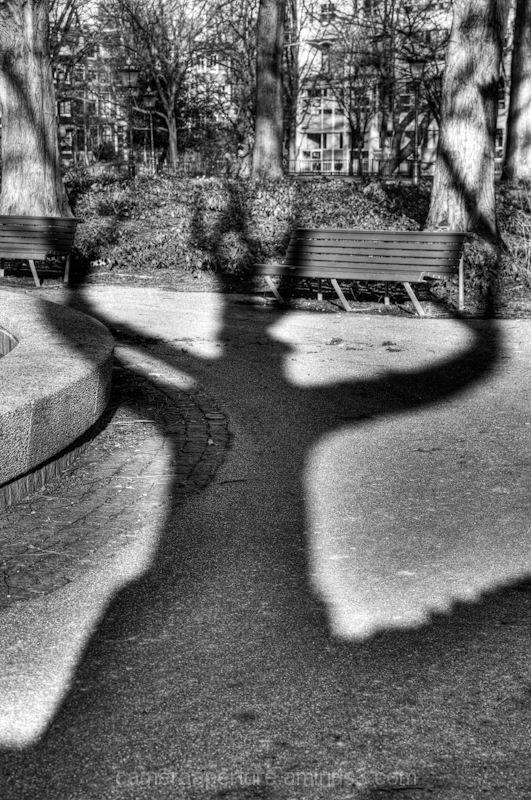 The shadow of a tree in the city of Amsterdam