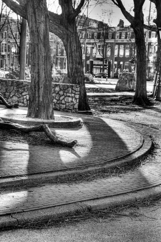 The shadows of trees in the city of Amsterdam