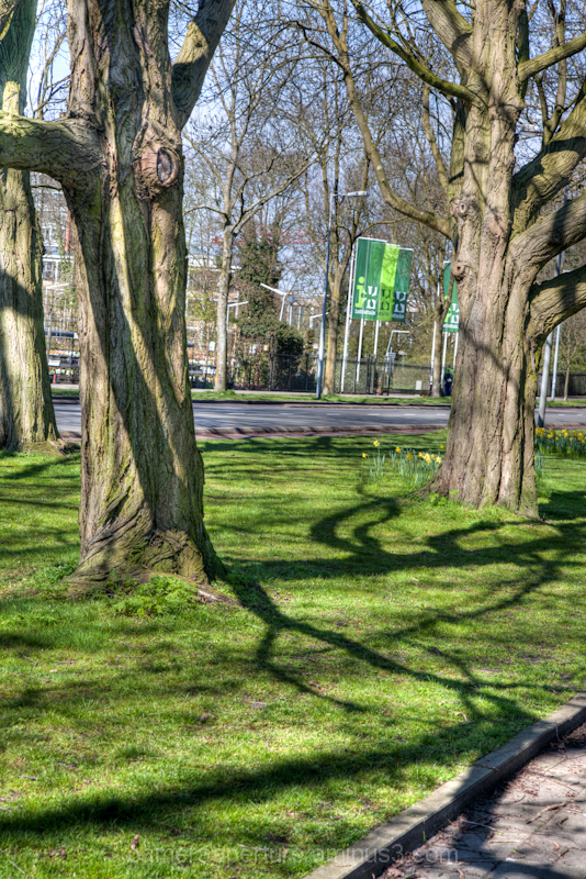 Trees in the city of Amsterdam
