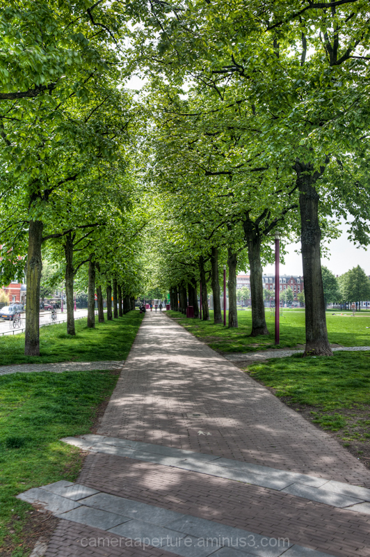 A path under the trees in the city of amsterdam