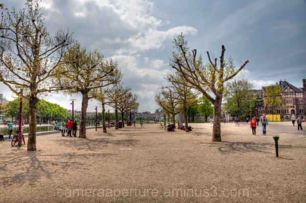 Trees in museumplein Amsterdam