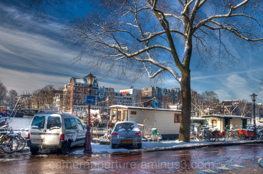 Snow covered tree in the city of Amsterdam