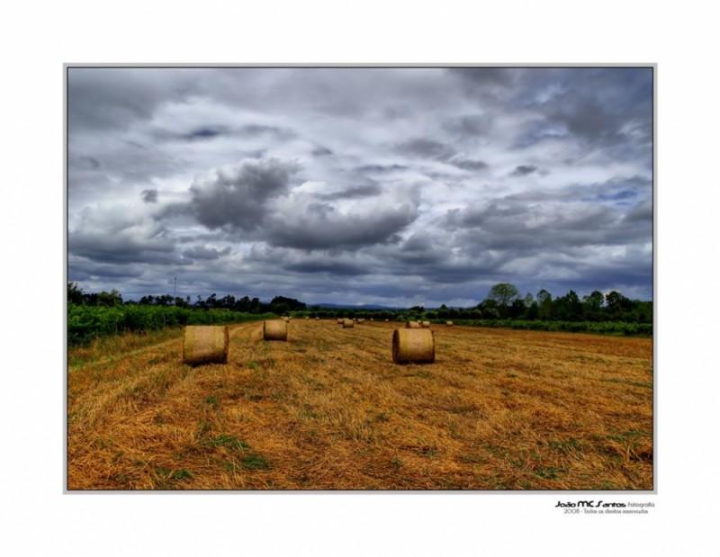 Estes campos...