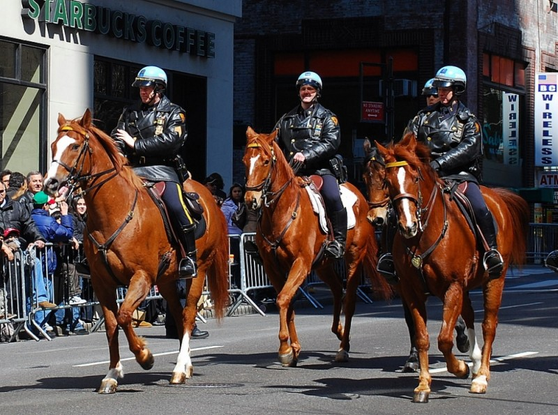 NYPD Mounted