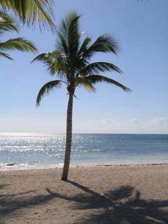 Palm Tree, Mexico