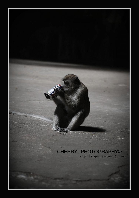 100+ for Monkeys!