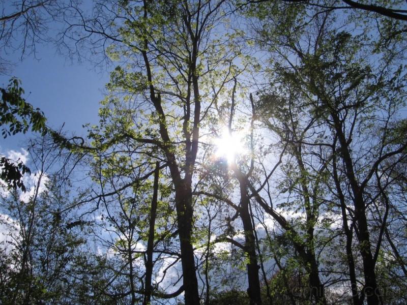 sun rays filtering through trees