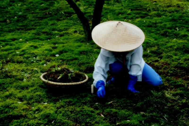Gardener, Kanazawa