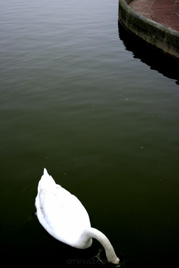 Swan, New Brighton