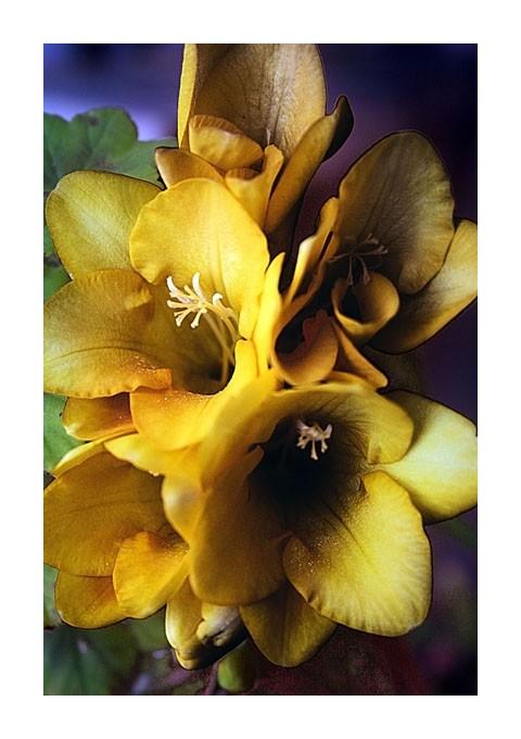 Uma Flor...