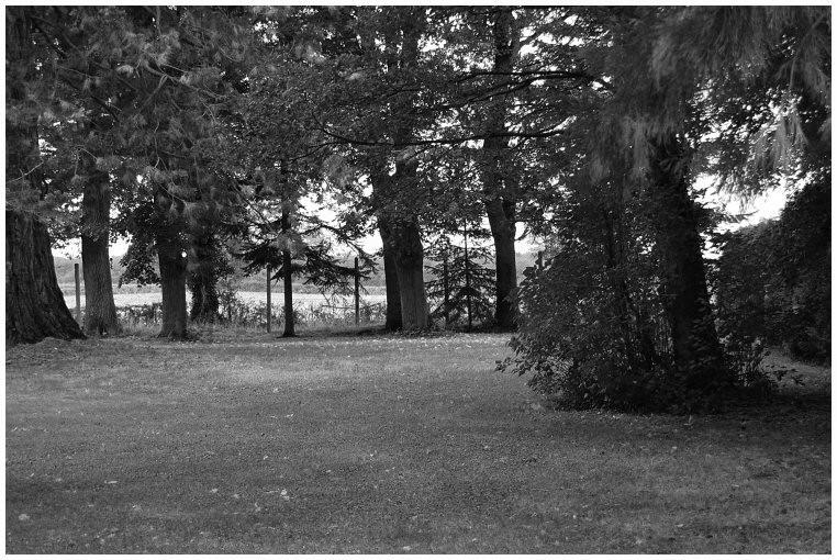 Dans le parc #2