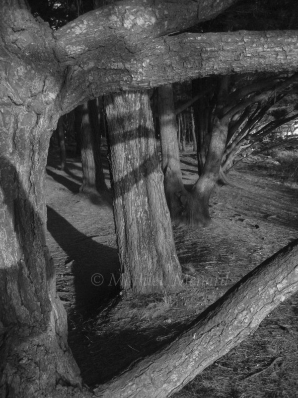 landscape, nature, shadows, tree