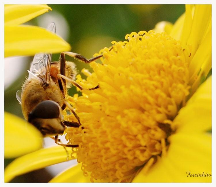 Doce flor