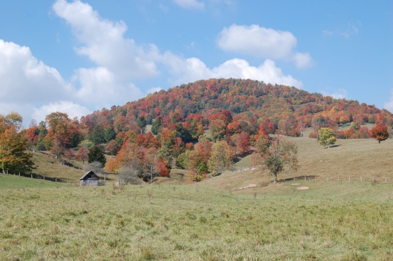 Old barn in Monogahela National Forest
