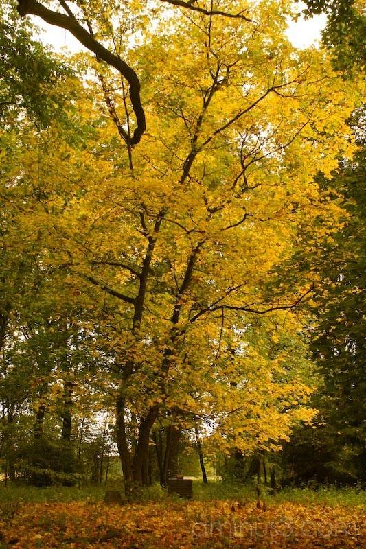 Fall in Chernihiv.
