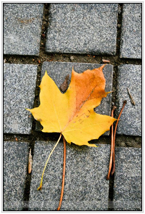 Yellow leaf.