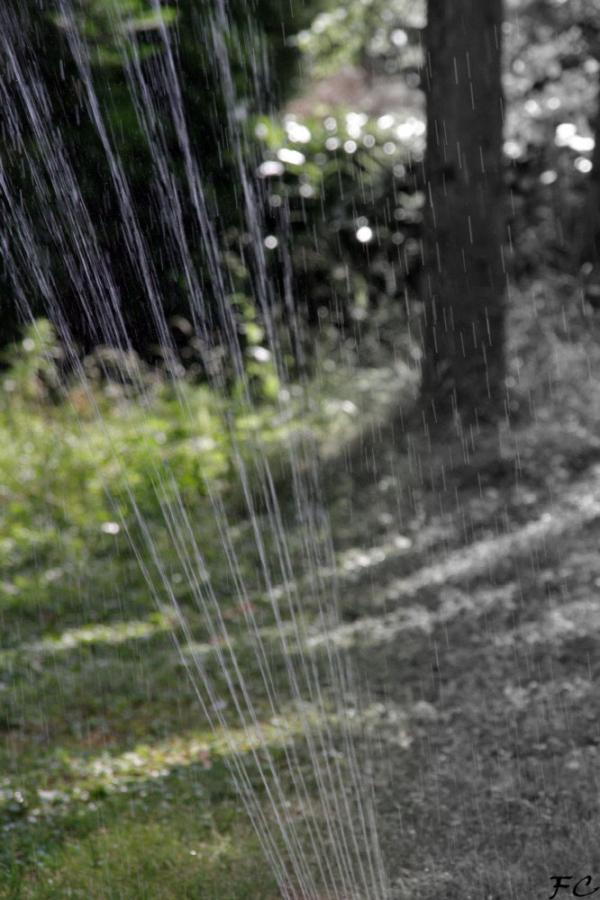 Pluie salvatrice