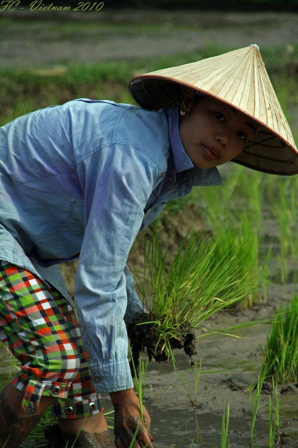 Viet Nam 2010 #6
