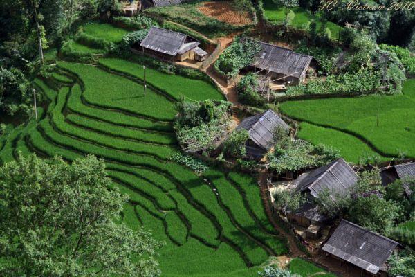 Viet Nam 2010 #7