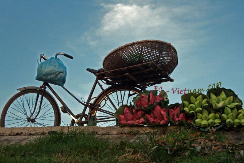 Viet Nam 2010 #30