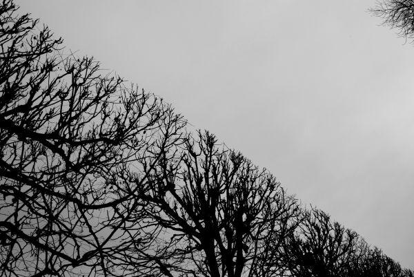 Diagonale d'arbres