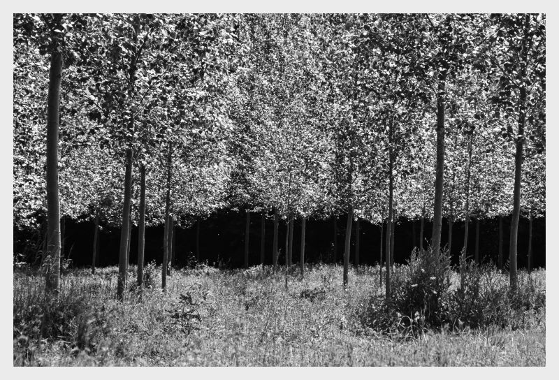 Ce matin, la forêt ...