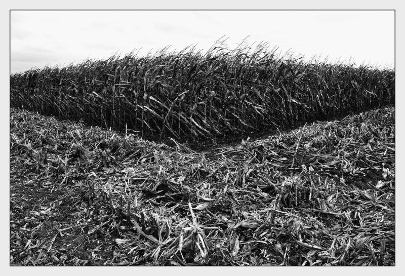 Géométrie rurale
