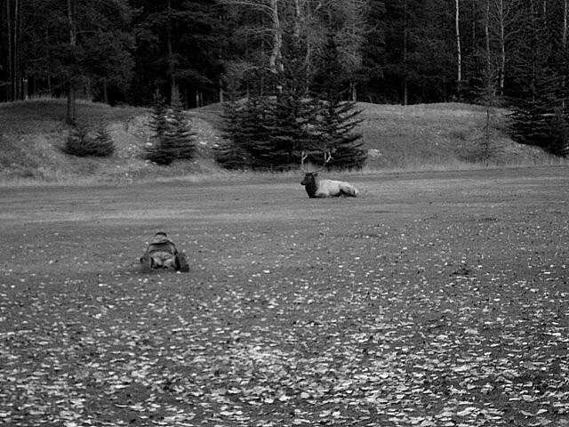 photogrpaher elk hunt