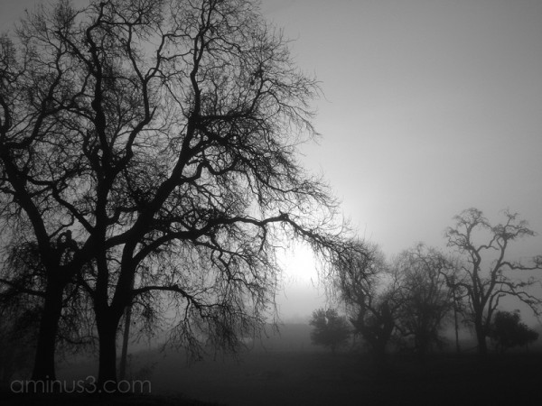 fog trees sun morning landscape
