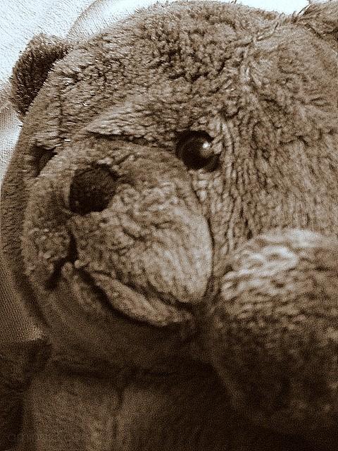 fuzzy teddy bear