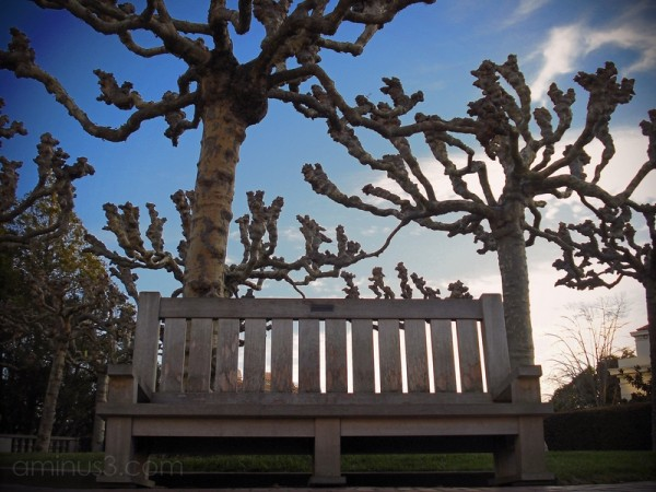 bench trees sunset berkeley