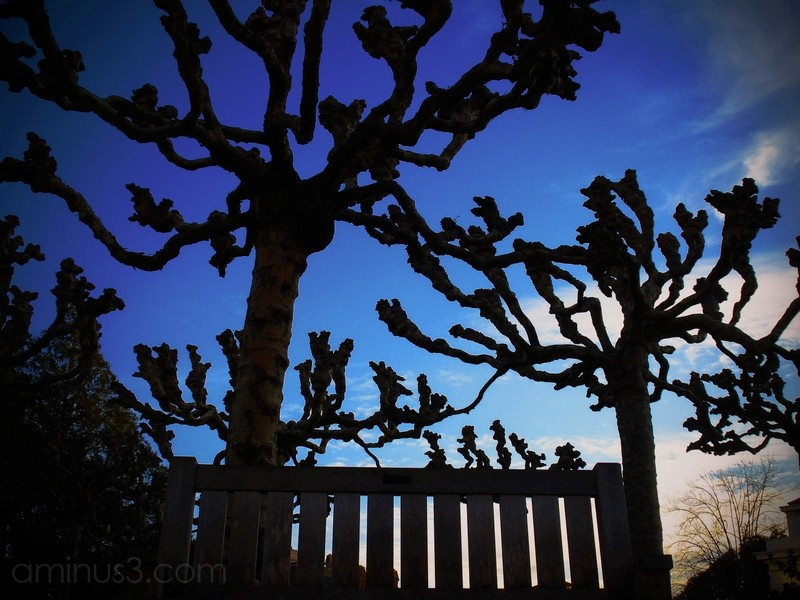 bench trees sunset berkeley