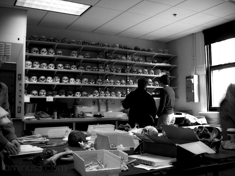 human osteology laboratory skulls remains