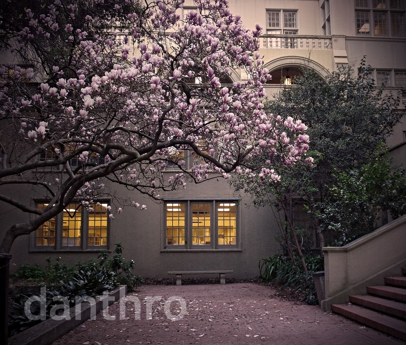 bench magnolia tree