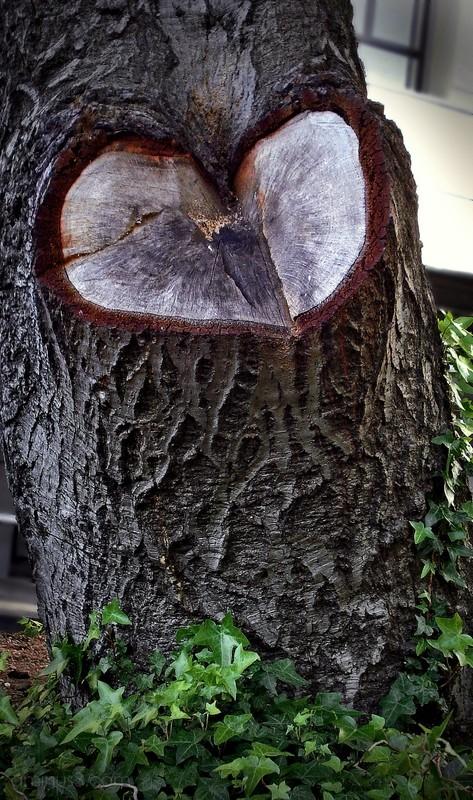 bleeding heart tree trunk shape