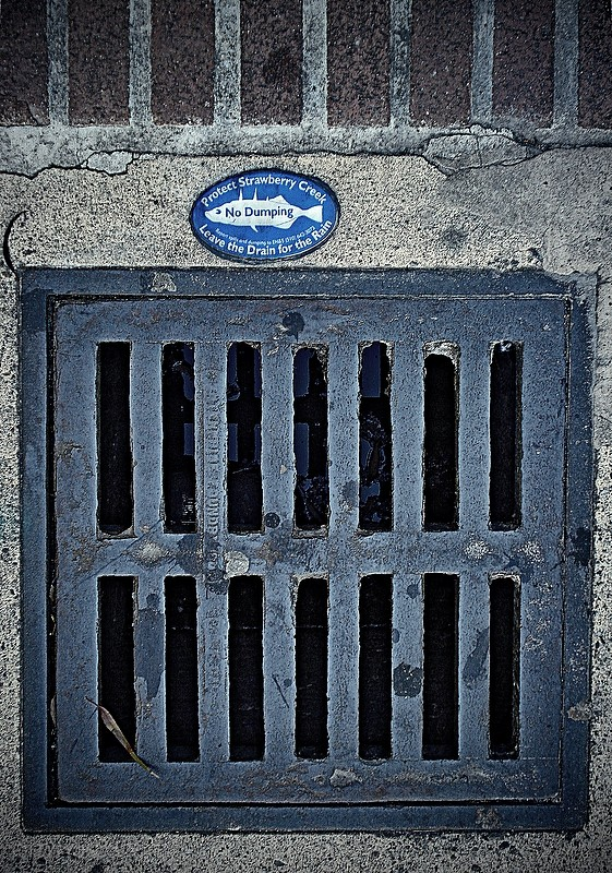 drain label fish dumping pollution berkeley