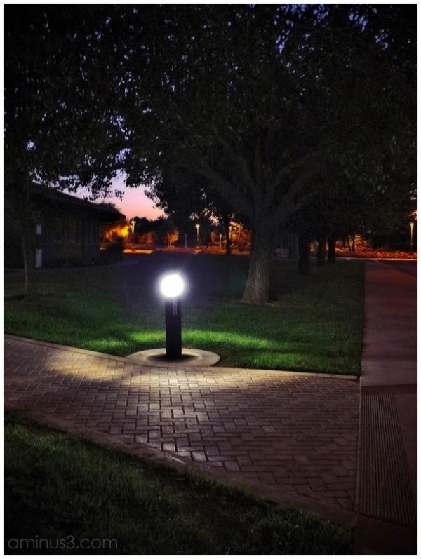 light lamp tree night sunset