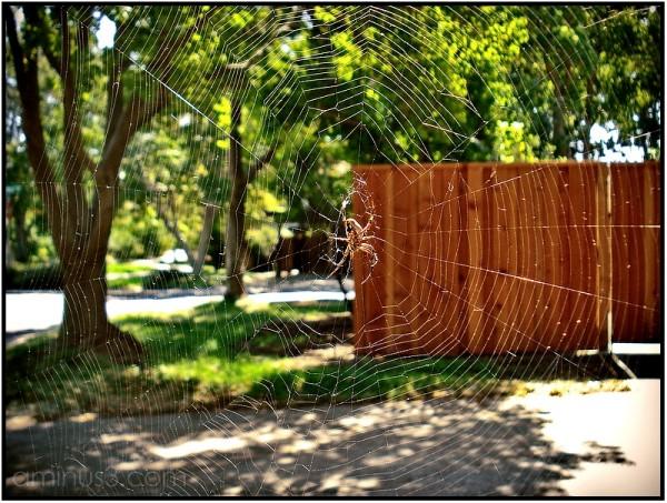 spider web spiderweb