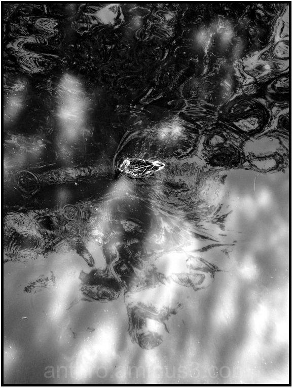 duck creek water ripples