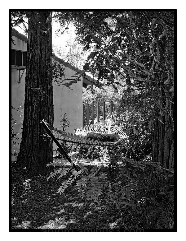 hammock tree house branches yard