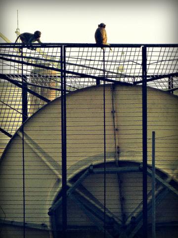 untitled monkeys above satellite dish