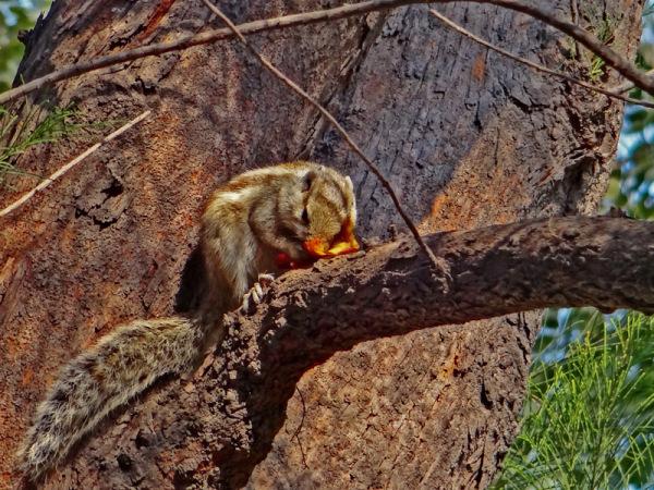 untitled squirrel