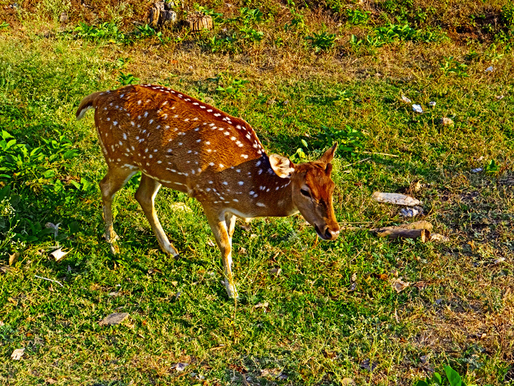 untitled village pet deer
