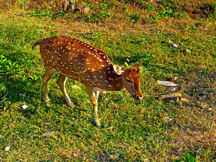 untitled village pet deer