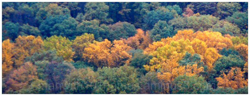 Fall on Blue Mountain ...