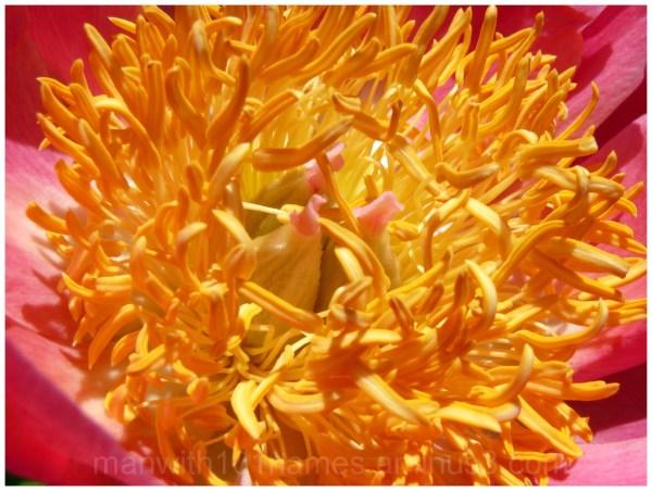 In Full Bloom ...