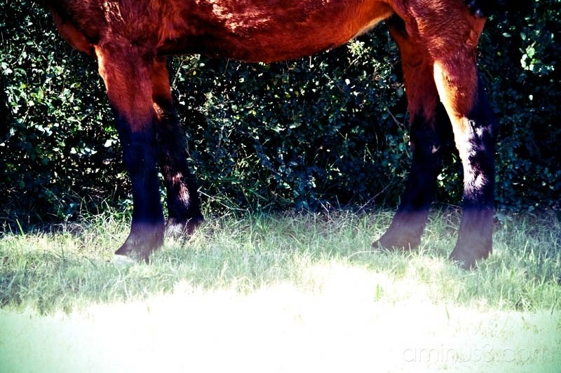 legs of a horse