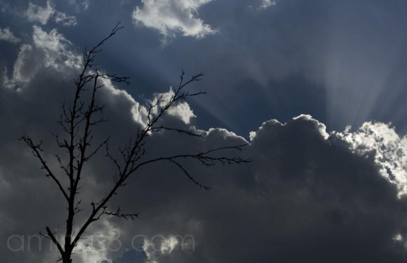 A Cloud Of Vitality!